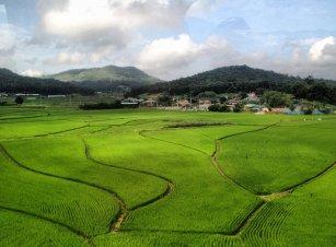 mudfest_ricefields