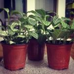 Some plants to make it feel like a home.