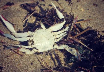 A crab got left behind.