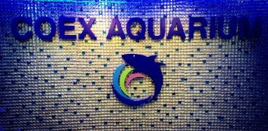 After walking through the craziest maze of a mall, we finally found the aquarium! — at Coex Aquarium.