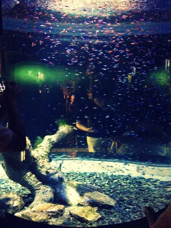 I counted. There were exactly a gazillion and two fish. — at Coex Aquarium