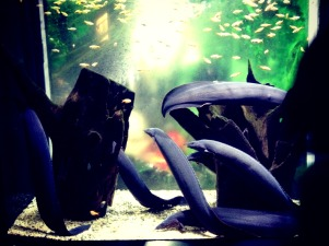Eels. Yuck. — at Coex Aquarium