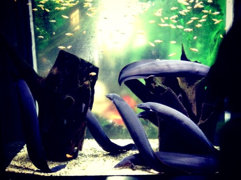 Eels. Yuck. — at Coex Aquarium