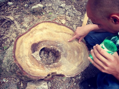 We counted, this tree is a million years old.