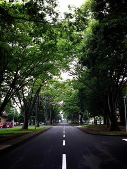 Yokota in the summer