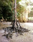 Phang Nga (2)